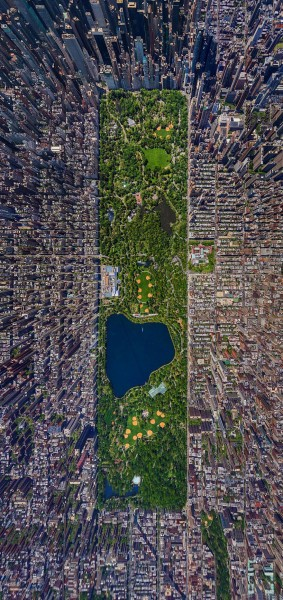 Что думают птицы, глядя на мегаполисы?