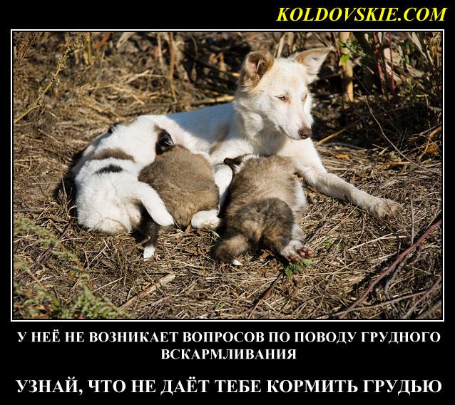 grudnoe_kormlenie_sobaka