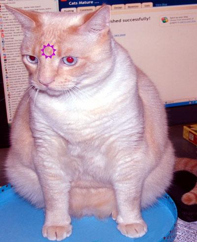 third_eye_buddy_cat