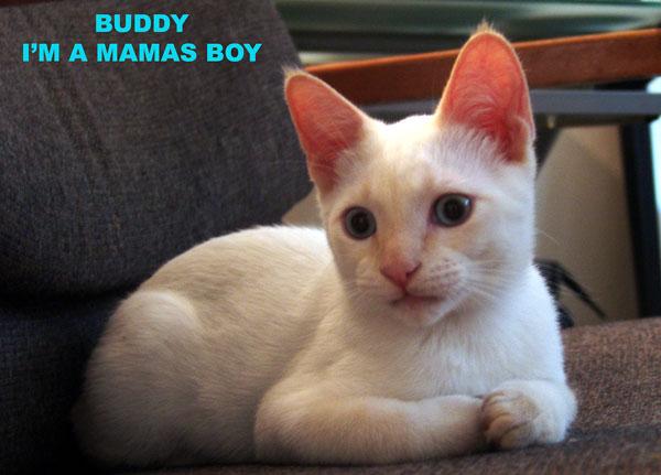 small_buddy