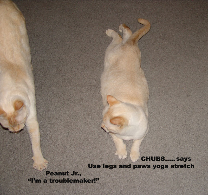 troublemaker_stretching_cats