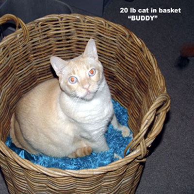 basket_buddy