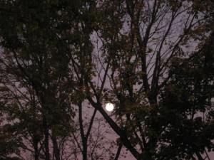 awesome_full_moon_in_trees
