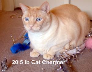 cat_charmer