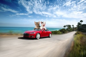 tesla-motors-kitten-autopilot