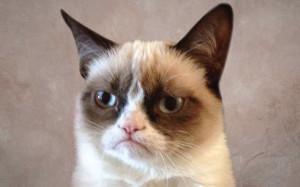 grumpy-cat-profile