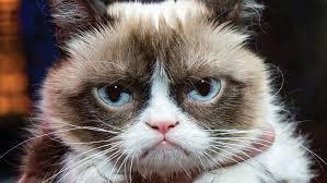 grumpy_cat_on