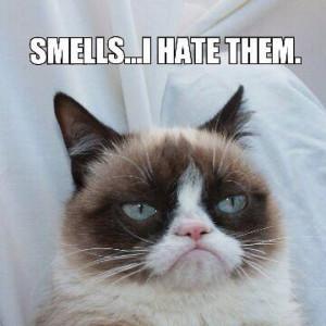 Smells-Grumpy-Cat