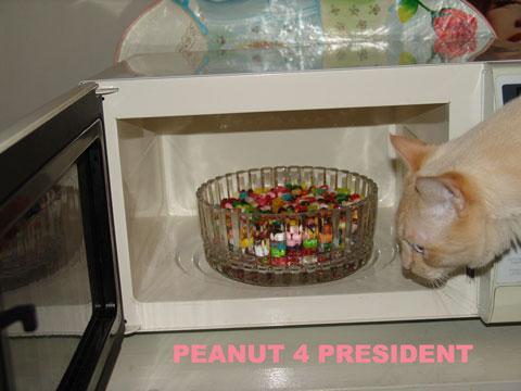 Peanut 4 President