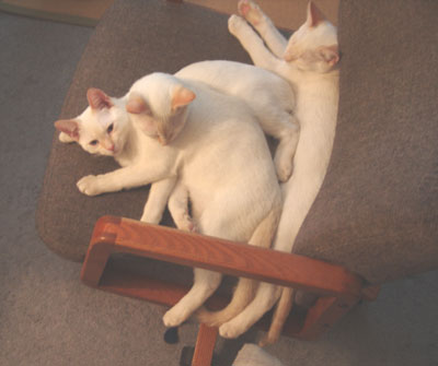 3_cats_LJ