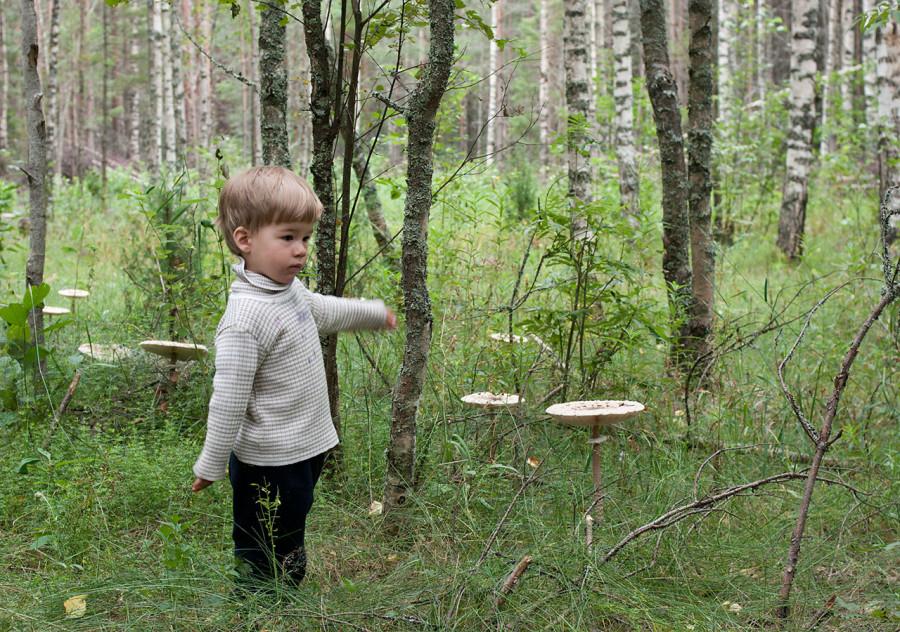 Мальчик и грибы
