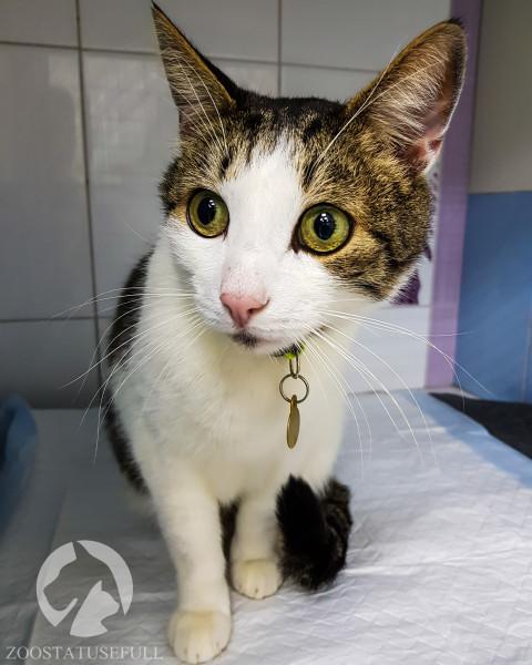 носитель коронавируса у кошек