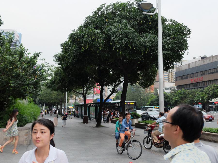 Манго на улицах Шэньчжэня