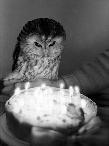 owl_birthday