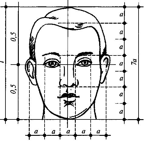 лицо схемы правильное пропорции