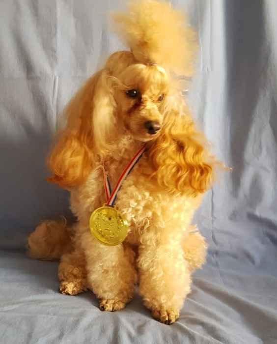 Кешью Мой Нежный Ангел с медалью