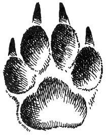 Отпечаток собачьей лапки