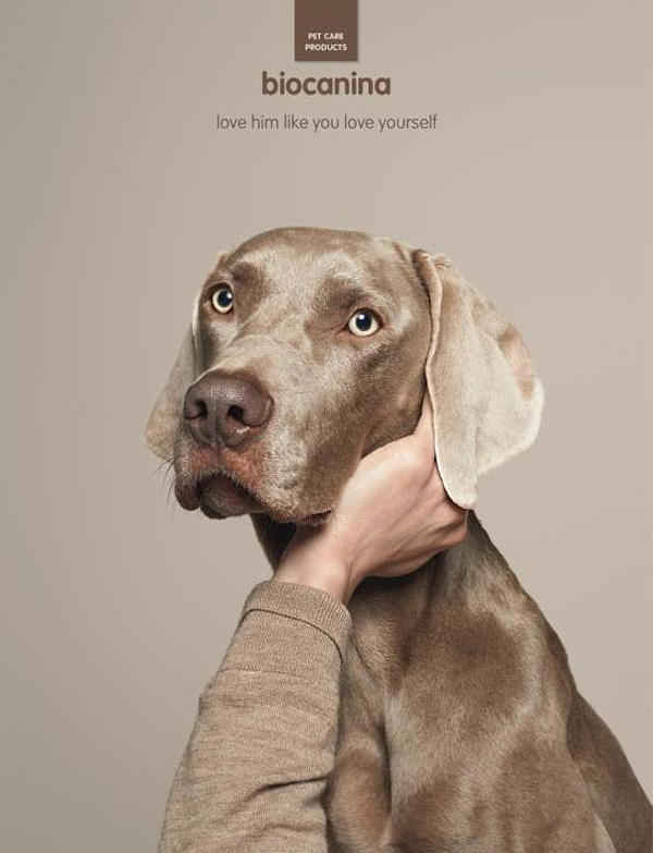 Собаки как люди 3