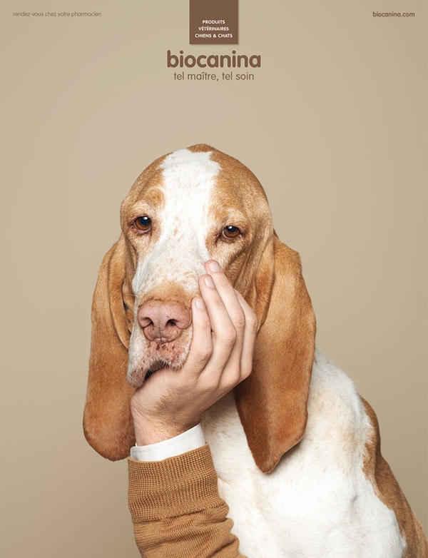 Собаки как люди