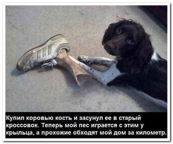 ужасно страшная собака