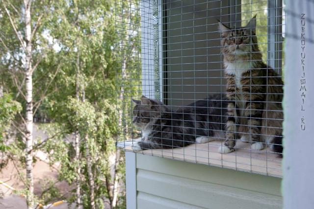 """Мини вольер на балконе. или выгул куна на """"свежем"""" воздухе в."""
