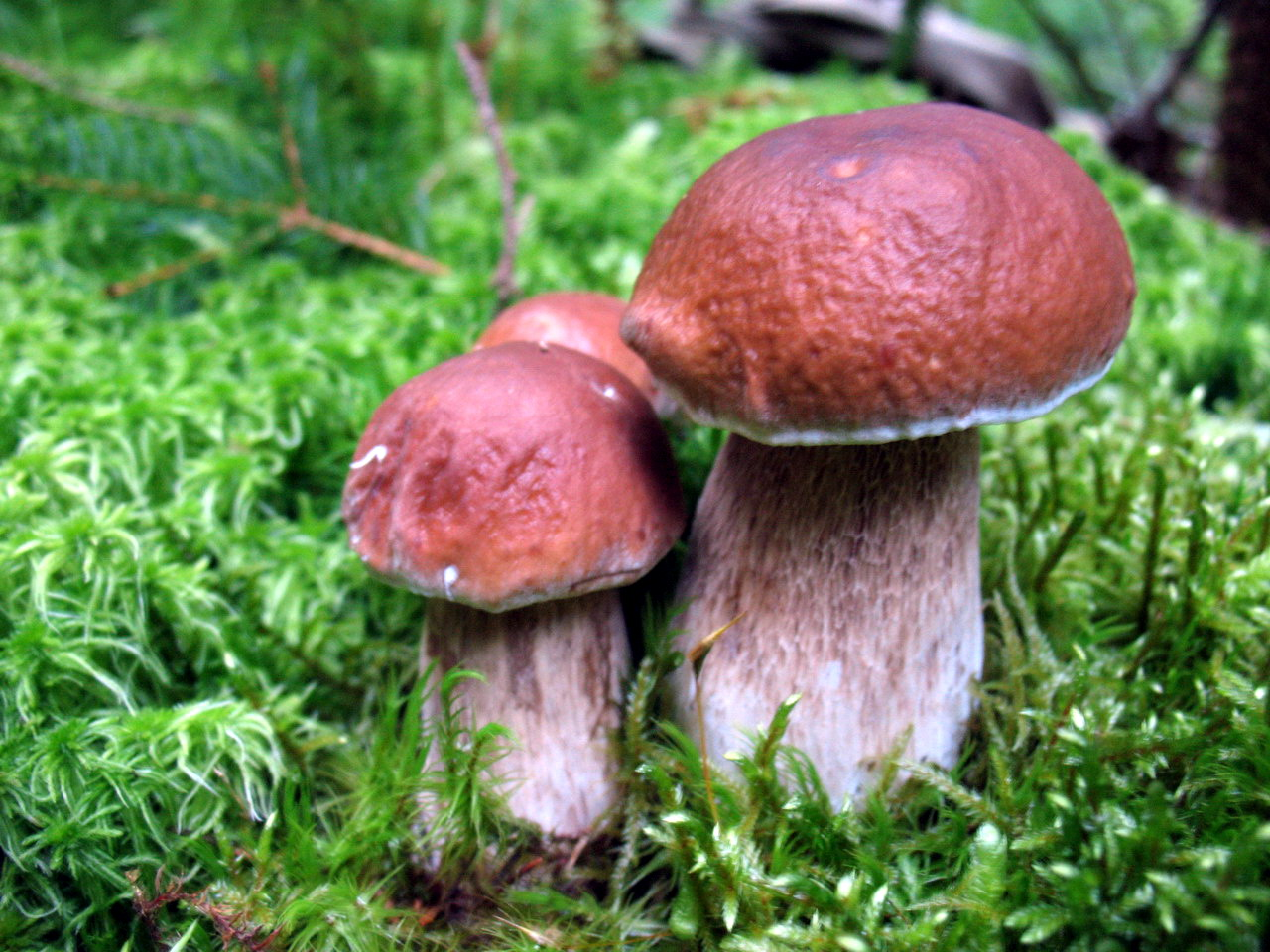 Перші грибочки в цьому році