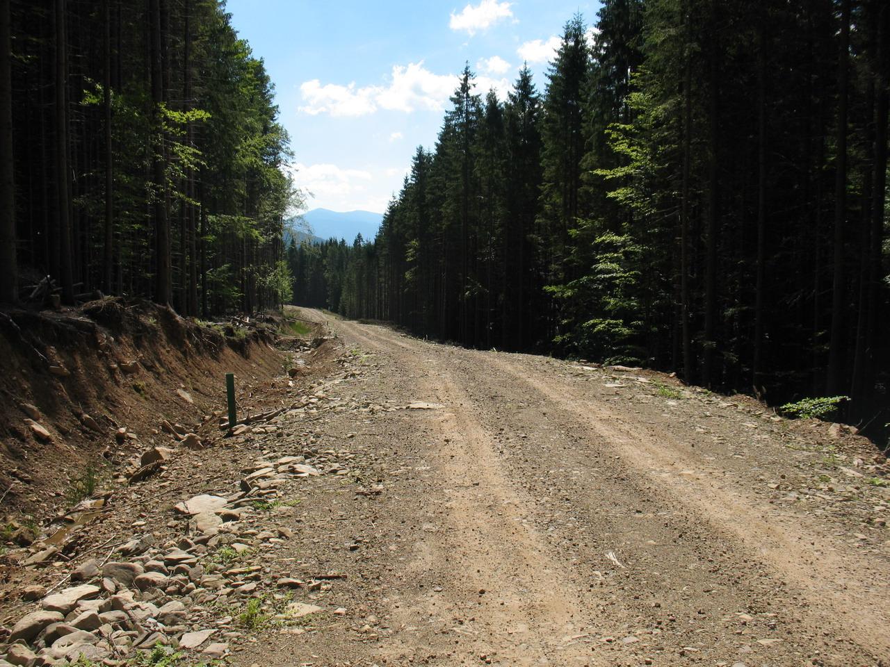 Нова дорога з Росоханського лісництва в сторону Мислівки