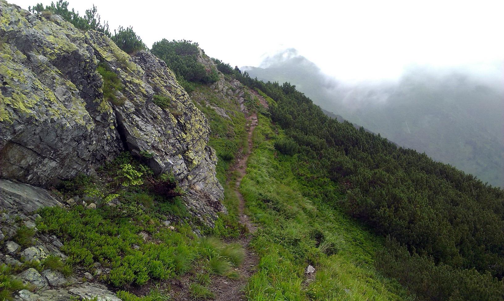 Зі Щербана стежка йде в сторону ПІМ. Трохи йдемо по ній, а потім звертаємо наліво, в долину, в сторону пол.Лисичої