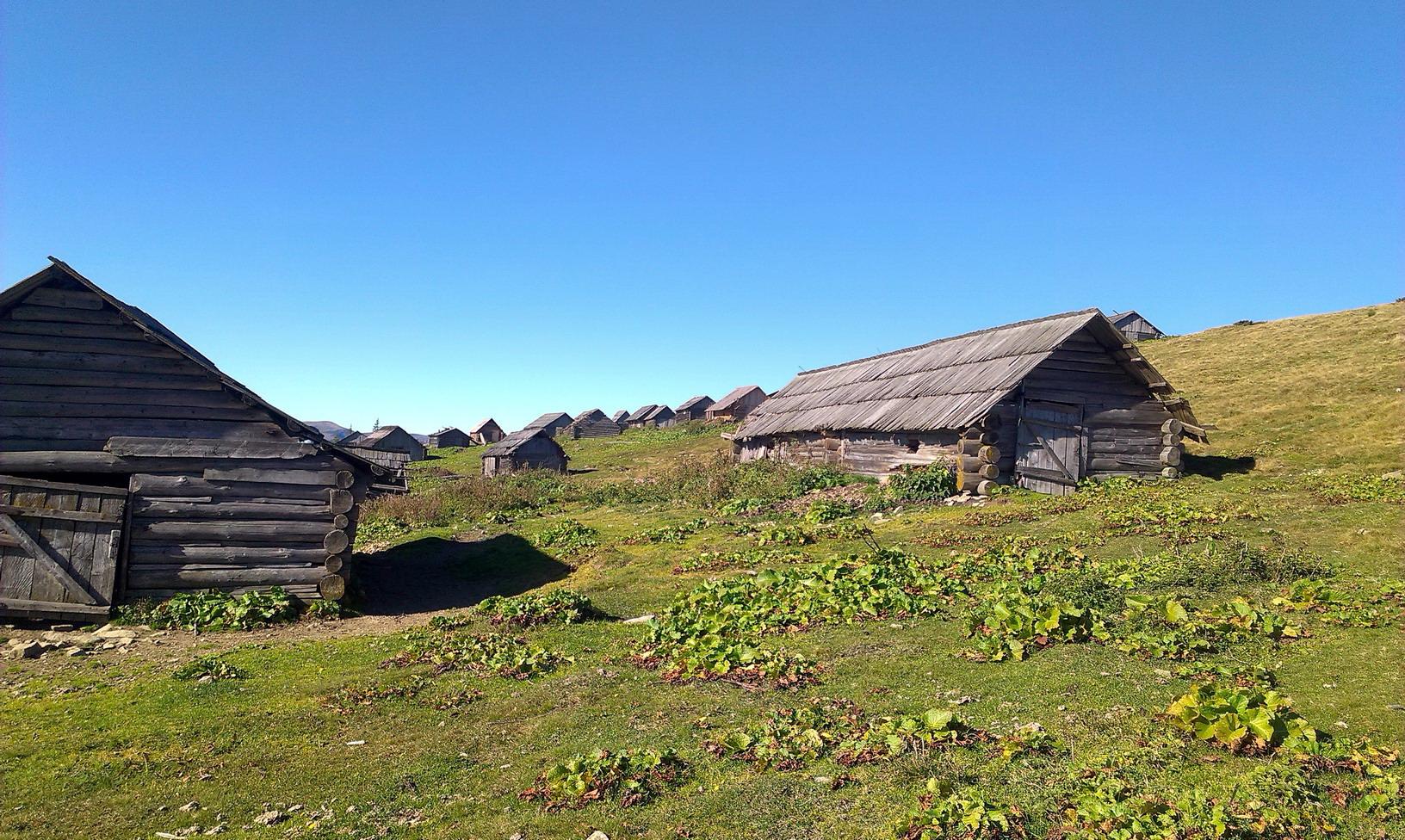 Тут майже ціле село :-)