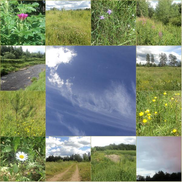collage - Травы