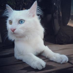 кот белка