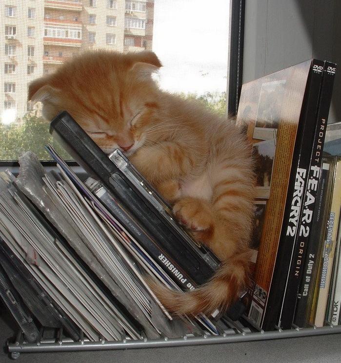 sleepingcats02